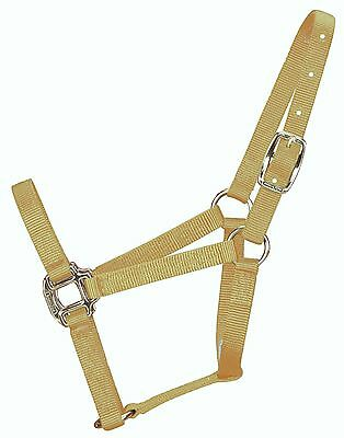 Hamilton 3Q WNGD 3/4-Inch Nylon Quality Weanling 200 to 300-Pounds Halter gold