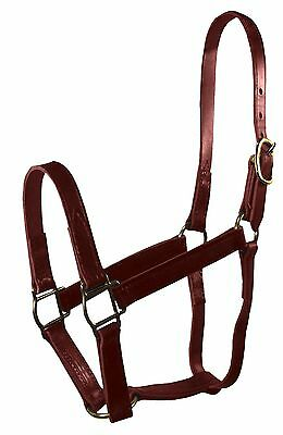 Hamilton 3/4-Inch Leather Quality Halter Weanling Size Fits 200 to 300-Pound ...