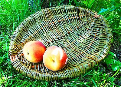 Make this Willow Frame Basket: a Weaving Kit for Complete Beginners.