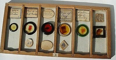 6 Antique Microscope Slides In Tray