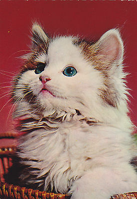 Cat Photo. Printed in Italy. Cecami #926. Postcard