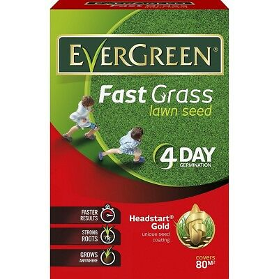 EverGreen Fast Grass Lawn Seed Carton, 2.4 kg 80m2 556498