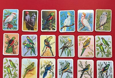 Tuckfields Bird Cards x 18