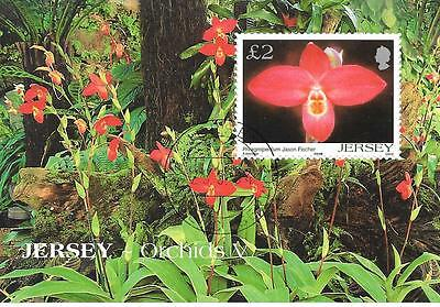 Jersey. M.S. Orchid's V. Used. 26/06/2004.