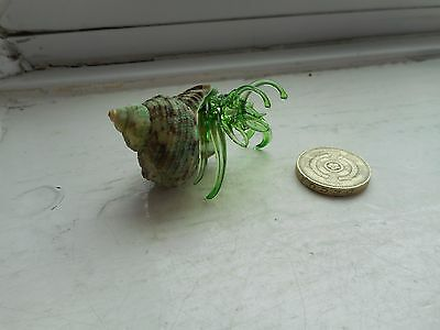 Crab -  Glass/crystal Beautiful  Green Hermit Crab - Glass Crab In Real Shell