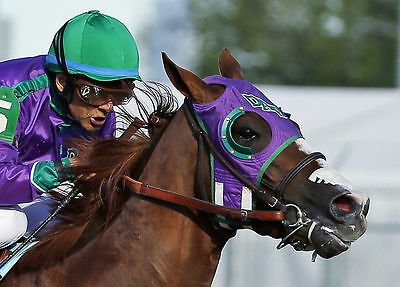 California Chrome 2014 140Th Kentucky Derby Horse Race Racing 8X10 Photo Picture