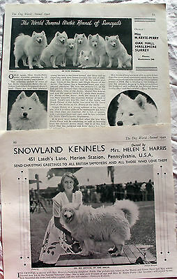 SAMOYED DOG  BREED KENNEL CLIPPINGS 1930s - 2010s x 30
