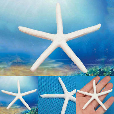 12pcs Beautiful Finger Starfish Beach Wedding House Crafts White Toys Gift