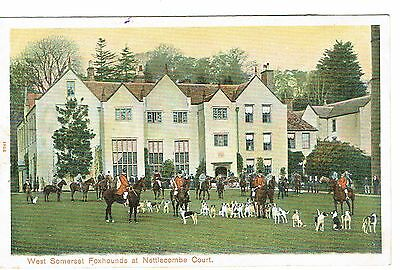 Nettlecombe Court West Somerset Foxhounds 1900's Publisher Peacock Series