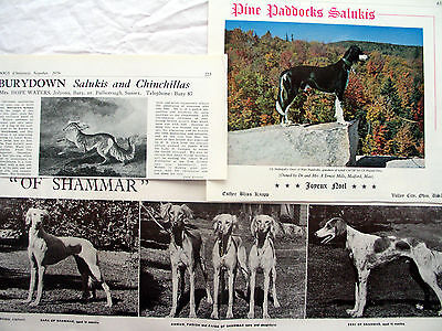 SALUKI HOUND DOG BREED KENNEL CLIPPINGS 40s - '00s  x 40
