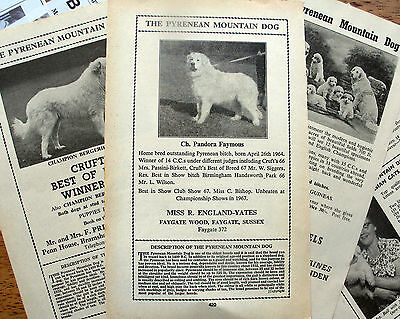 PYRENEAN MOUNTAIN DOG Great Pyrenees BREED KENNEL CLIPPINGS 50s - 00s  x 40