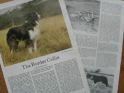 BORDER COLLIE DOG KENNEL CLIPPINGS 50s - 80s Incl 1983 Kennel Gazette art.  x35
