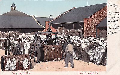 NEW ORLEANS , Louisiana , 1900-10s ; Weighing Cotton