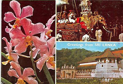 BF36423 greetings from sri lanka ceylon types    front/back scan