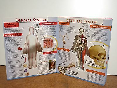 Three D Book The Human Body For Kids