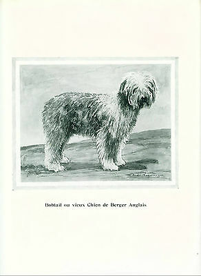 RARE Dog Print 1934 Old English Sheepdog Dog Limited Edition Print from France