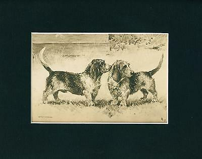 Antique Dog Print 1915 Basset Griffon Dogs by Arthur Wardle