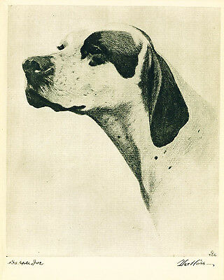 Dog Print 1931 Pointer Dog by Bert Cobb named Champion Dapple Joe VINTAGE