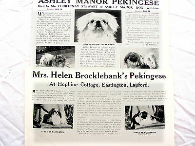 PEKINGESE TOY DOG BREED KENNEL CLIPPINGS x 40 1930s - 40s
