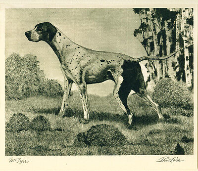 Dog Print 1931 Pointer Dog by Bert Cobb named Champion McTyre VINTAGE