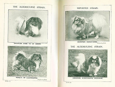 Dog Book 1923 The Popular Pekingese by Vlasto First Edition SCARCE
