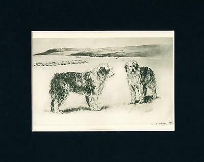 Antique Dog Print + Article 1897 Old English Sheepdog Arthur Wardle