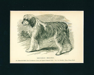 ANTIQUE Dog Print 1897 Old English Sheepdog Bobtail