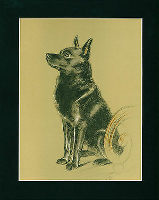 Color Dog Print 1940 Schipperke by Lucy Dawson VINTAGE