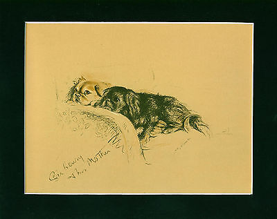 Dog Print 1940 Pekingese Dogs by Lucy Dawson VINTAGE