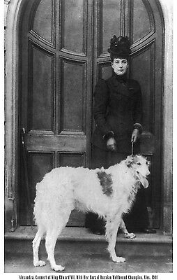 1901 Alexandra Champion Russian Wolfhound Borzoi Dog Lrg B&w Photo Print 1268