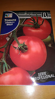 Semillas de Tomate PROFESIONAL Hibrido F1 Willy 30 aprx Lycopersicon seeds