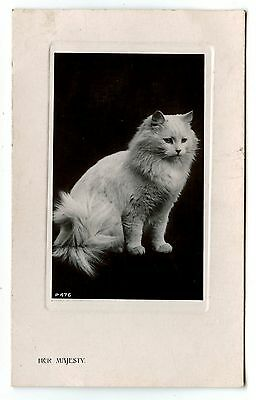 Carte Photo. Chat Persan.card Photo.	Persian Cat. Chat . Cat . Katze .