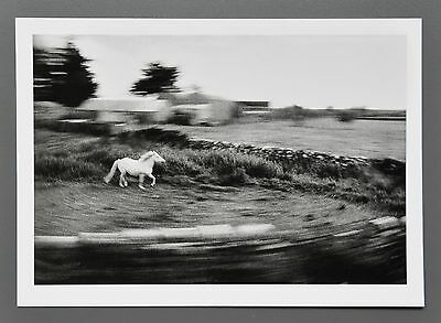 Hana Jakrlova Ltd. Ed. Photo 24x17cm Europäer Gallway 2000 Pferd Horse B&W Art