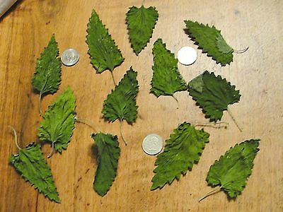 Dried Catnip Whole Leaf, Extra Large, 1 oz dry weight, approx. 6-7 cups, dried