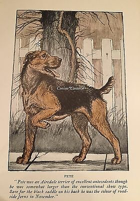 BEAUTIFUL VINTAGE  1926 AIREDALE TERRIER  Dog Print VINTAGE PRINT  Pete