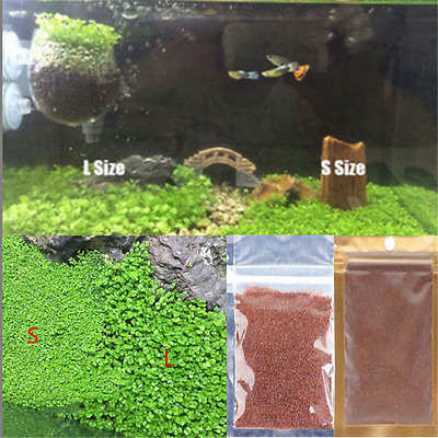 Green Aquarium Plant Seed Aquatic Leaf Water Plants Seeds Fish Tank Decor TR