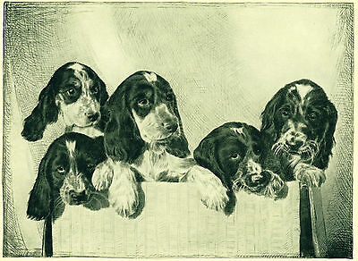 Dog Art Print 1935 English Springer Spaniel Puppies Vintage