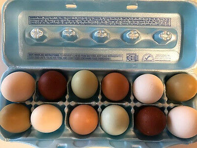 Mixed Breed Colorful Hatching Eggs - NPIP Flock!