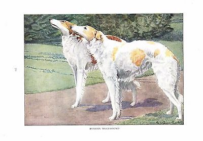 1919 Vintage Dog Print ~ Russian Wolfhound Painting ~ a/s Louis Fuertes