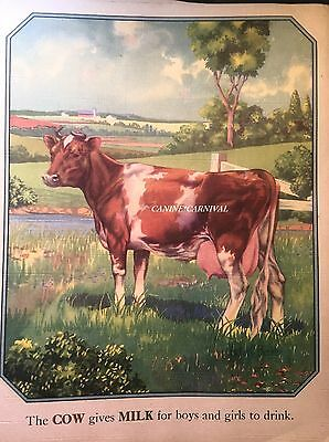 BEAUTIFUL MILKING COW 1943 CHILDRENS Vintage Art Print CATTLE BOVINE GUERNSEY