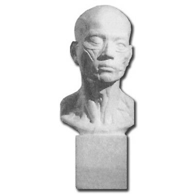 Plaster Cast Life Sized Human Head/Neck