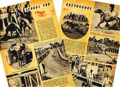 1945 SCHOOL FOR RACING GREYHOUND DOGS Mag. Article