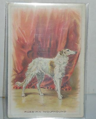 Borzoi Russian Wolfhound Antique Postcard One Cent Postage Beautiful Colors