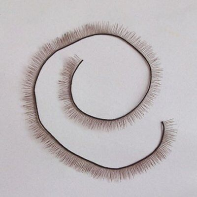 Brown Eyelashes For Reborn Baby Doll BJS SD doll Supplies 20cm length 6mm wide