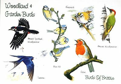 Woodland & Garden British Birds Card Gift Greetings Spotter Twitcher Enthusiast