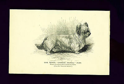 RARE ANTIQUE Advertising Print 1894 Skye Terrier Ad for Fanciers Gazette