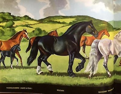 JEANNE MELLIN VINTAGE 1963 PRINT Horse breeds in Color