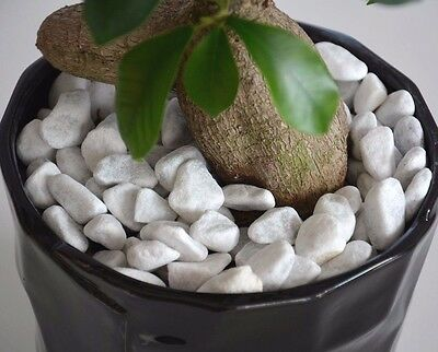 CARRARA Decorative Natural Stones Pebbles  SNOW WHITE *** HOME & GARDEN ***