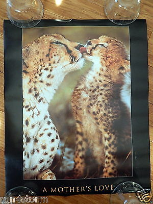 "A Mother's Love Cheetahs 15 ½"" x 19 ¼"" Poster"