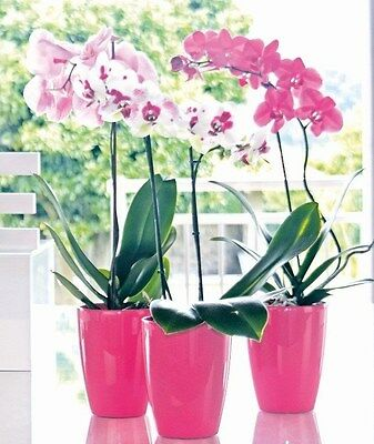 Job Lot Of 420 Pcs Artevasi Orchid Pot Pink Pots Plastic (Pe)
